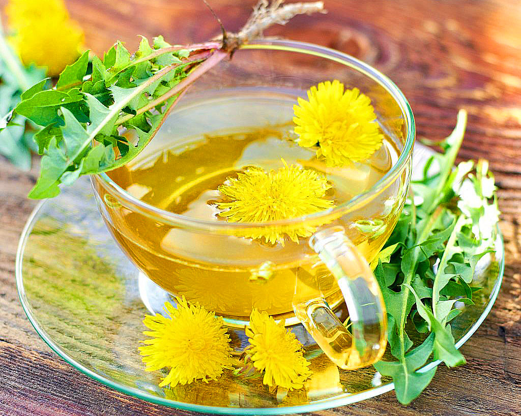 tea from dandelions is not useful for everyone