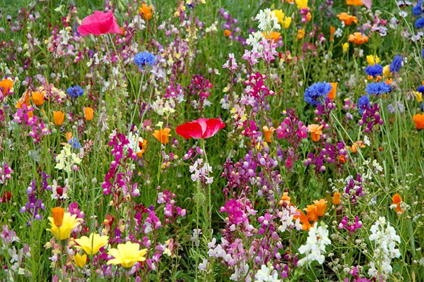 Flowering plants account for 15% of the total seed composition