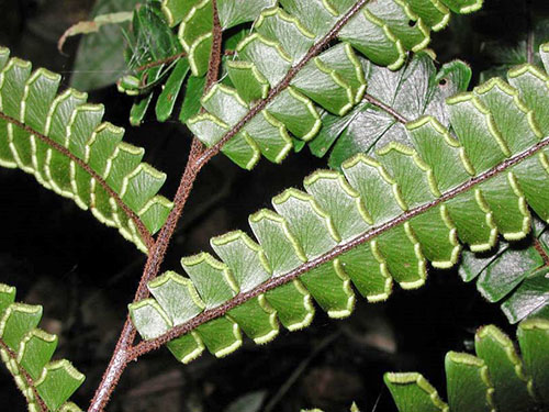 Leaflets of leaves are painted in greenish-brown tones